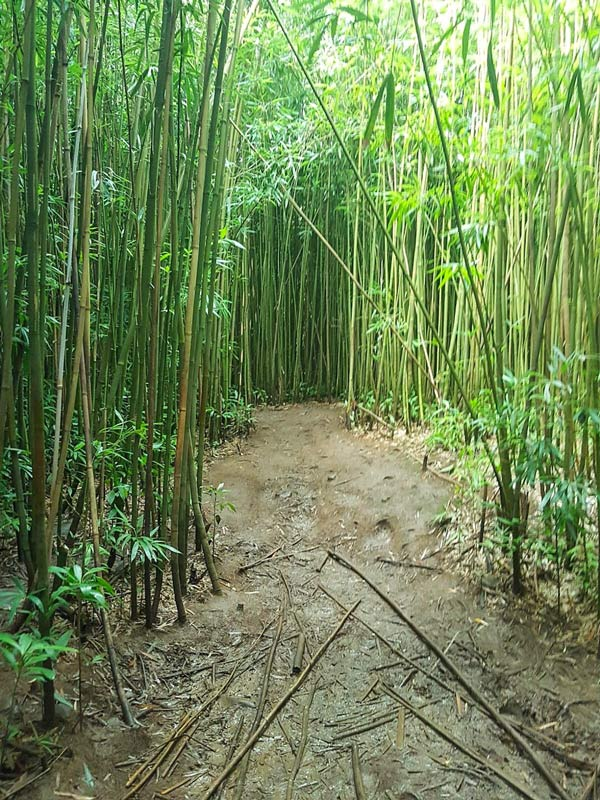 Make sure to add the Bamboo forest to your guide down the Road to Hana