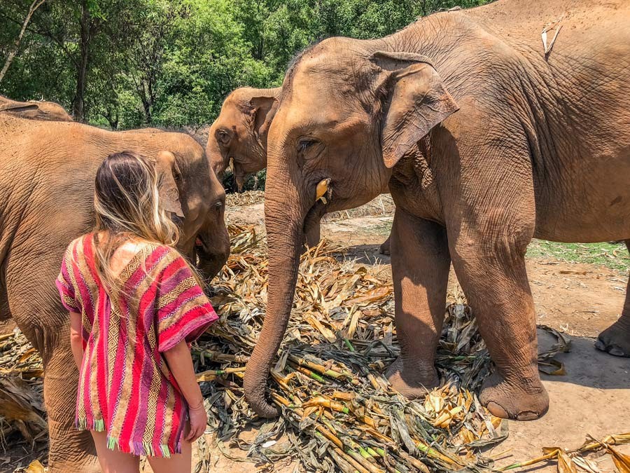 volunteering with elephants in Chiang Mai Thailand