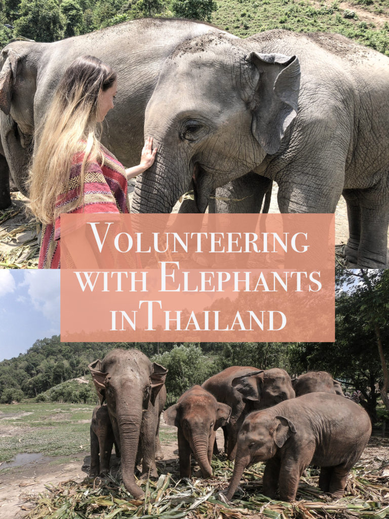 Woman Volunteering with elephants in Chaing Mai Thailand