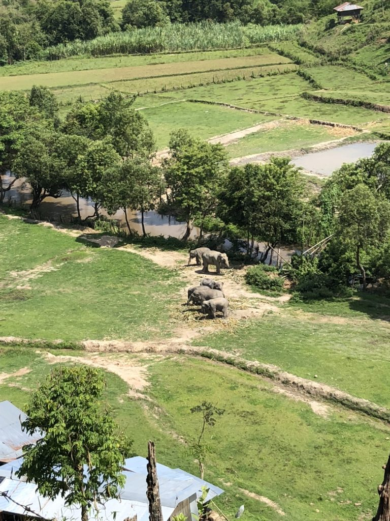 far view of elephants volunteering in thailand