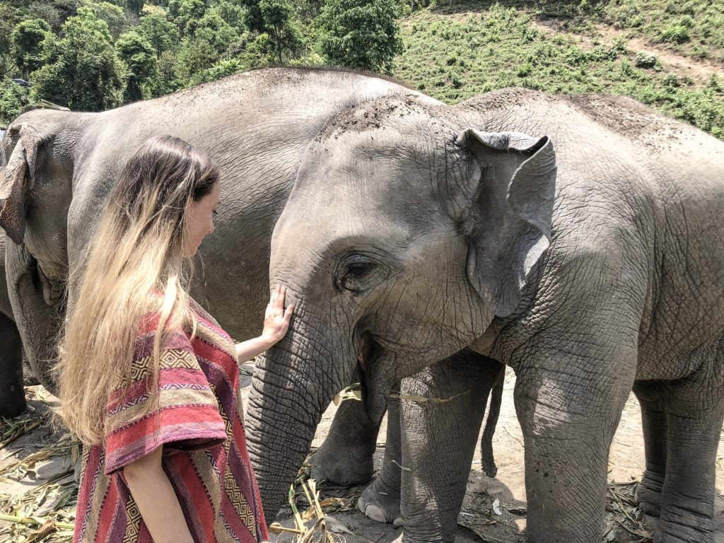 petting elephants volunteering in Chiang Mai, Thailand
