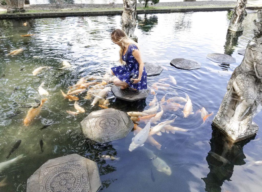 Sam feeding Koi fish at Tirta Gangga Temple stepping stones
