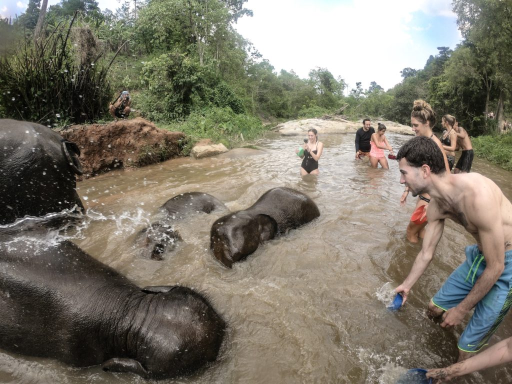 Playing with elephants in the river in Chaing Mai, Thailand