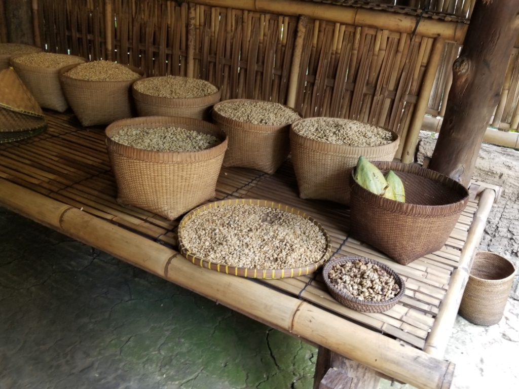 Ubud bali Pulina Coffee drying