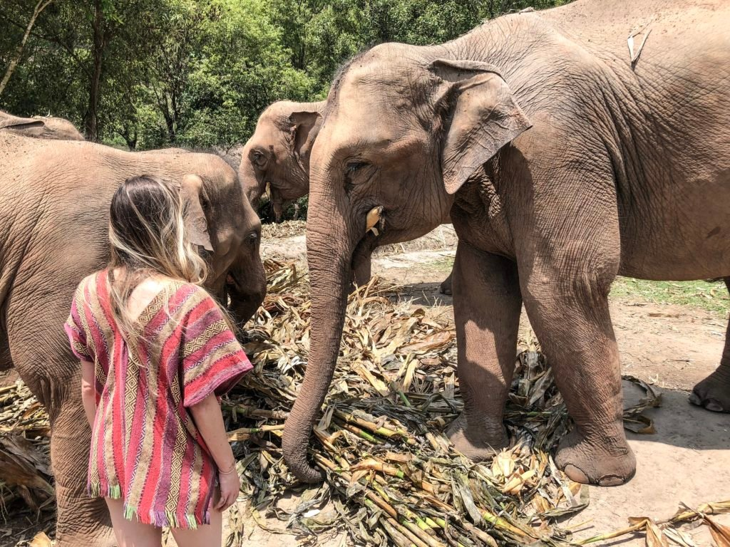 Findlovetravel admiring a group of asian elephants eating while volunteering in Thailand