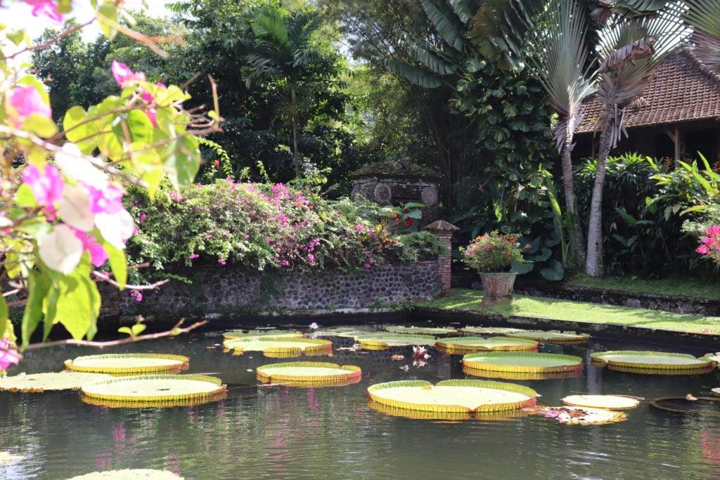 Tirta Gangga Temple Lily Pads Ubud Bali guide