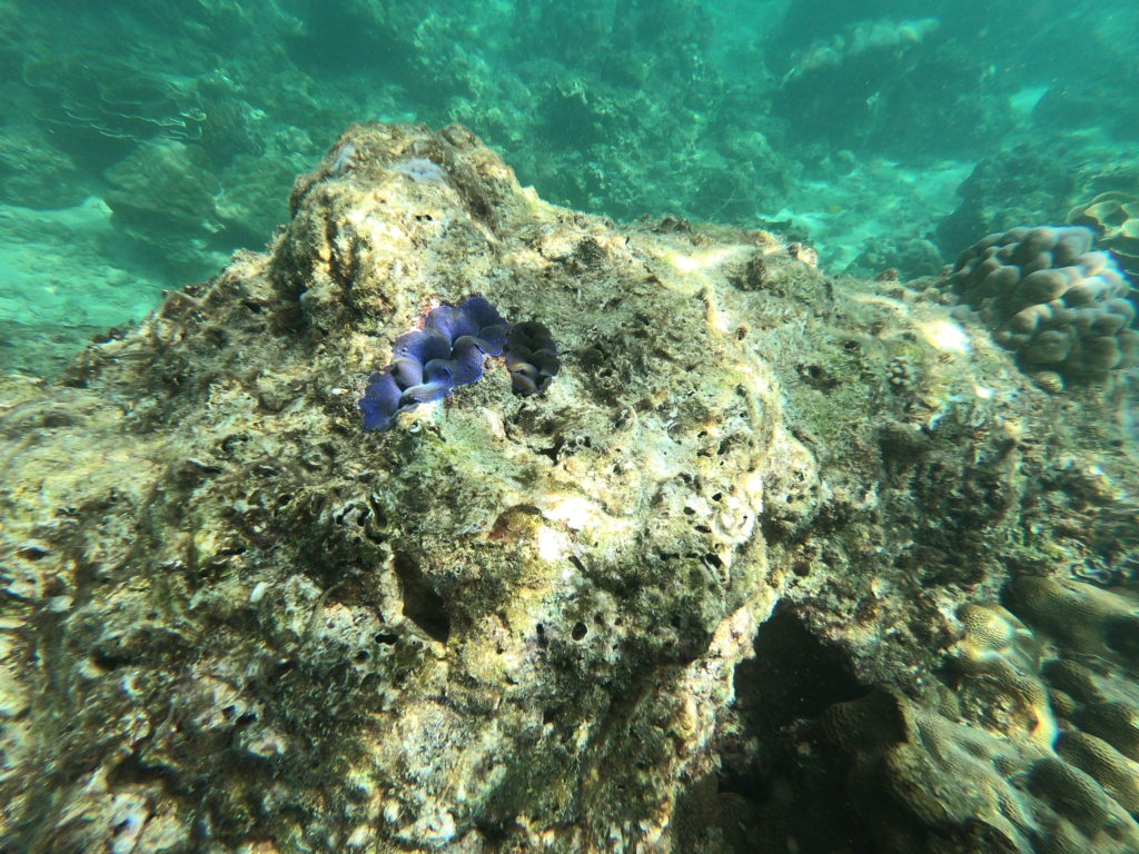 Snorkeling during Thailand Island Hopping Tour