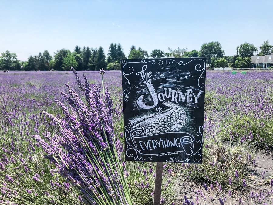 Holding a Lavender bunch in front of a Journey sign with Lavender Fields in the background.