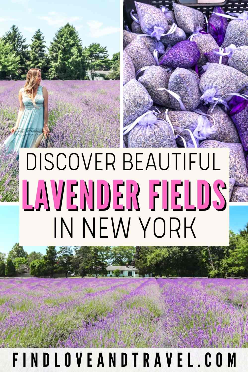 Lavender fields in Long Island New York where to find Lavender farms