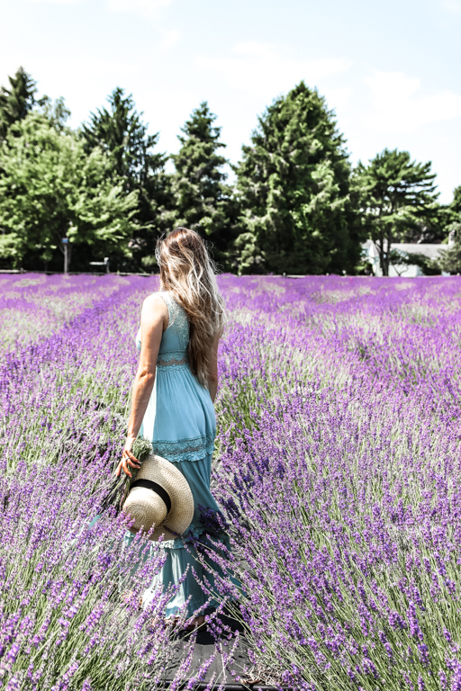 standing in the lavender fields in New York
