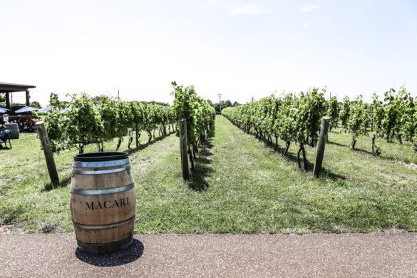 Vineyards at Macari Winery