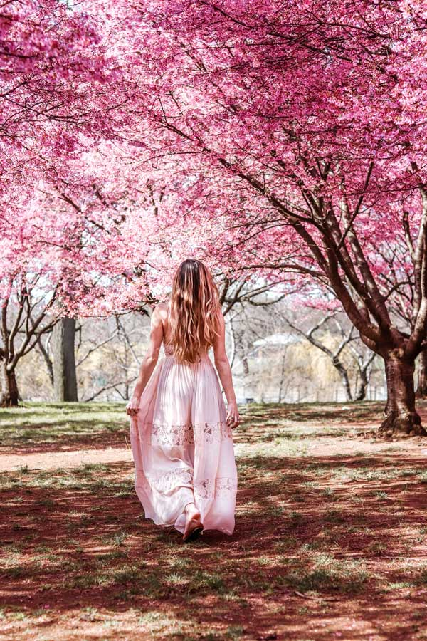 NYC Corona Flushing Park. Walking through Cherry Blossoms in NYC