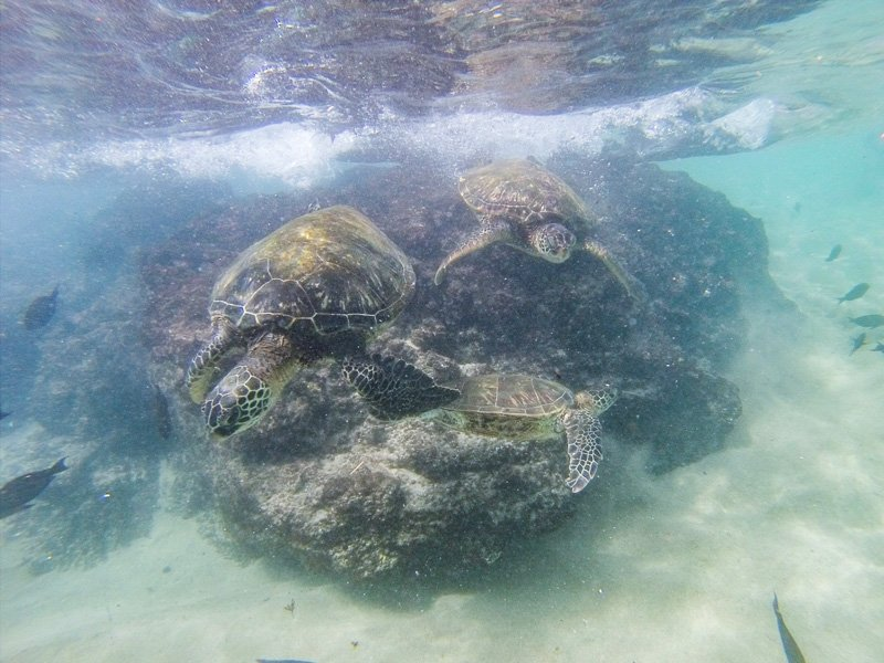 Swimming with Sea Turtles at Kaanapali Beach