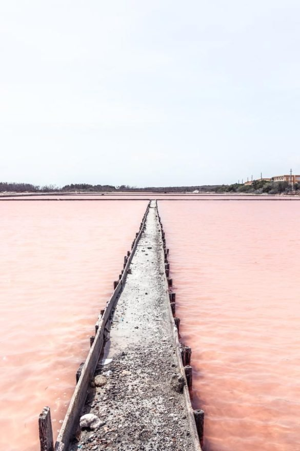 Visiting the Pink salt lakes is one of the best things to do in Puerto Rico