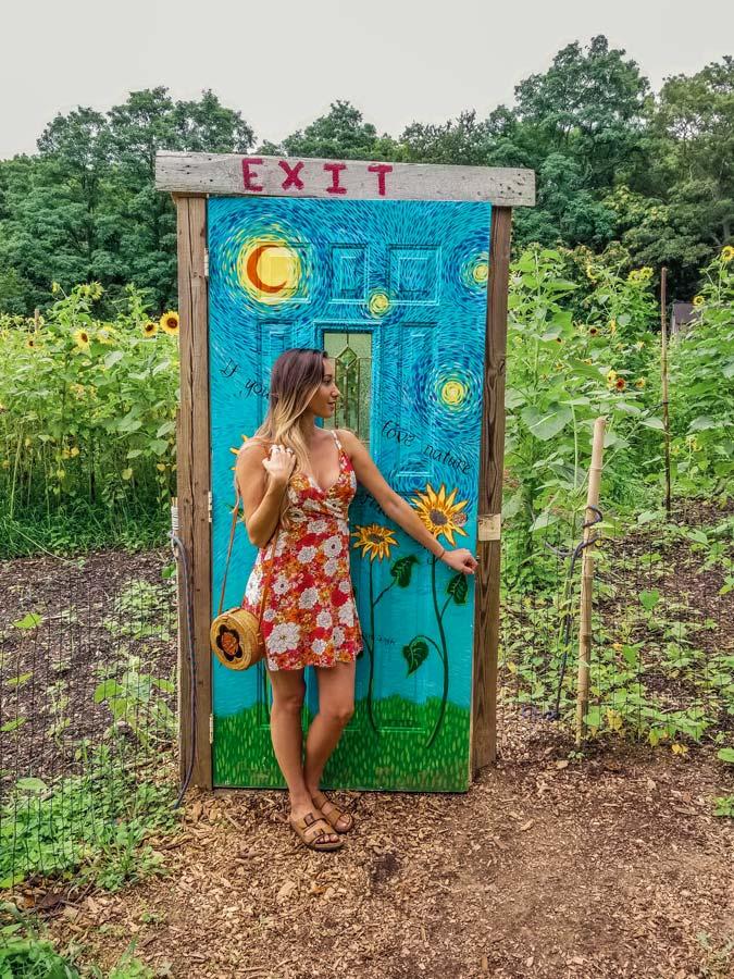 Manor Farm Sunflower Maze exit