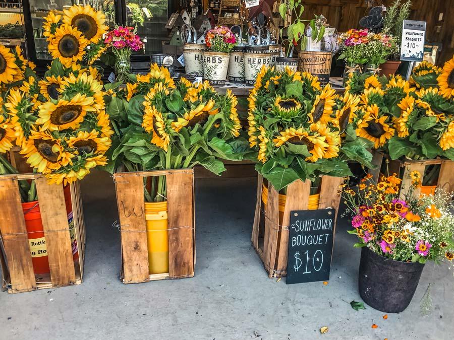 Waterdrinker Sunflower Market Place