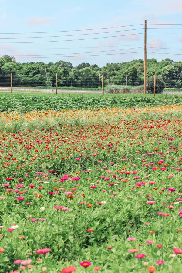 Wildflowers at Waterdrinker Farm