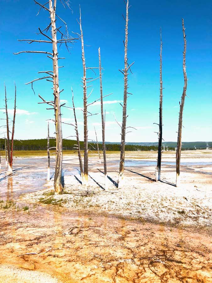 Petrified trees at Fountain Paint Pots