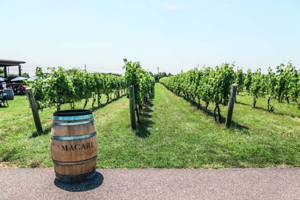 Macari Vineyards is one of the best on Long Island