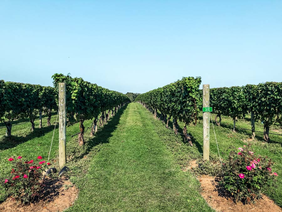 Wolffer Estate is one of the best vineyards on Long Island by the Hamptons