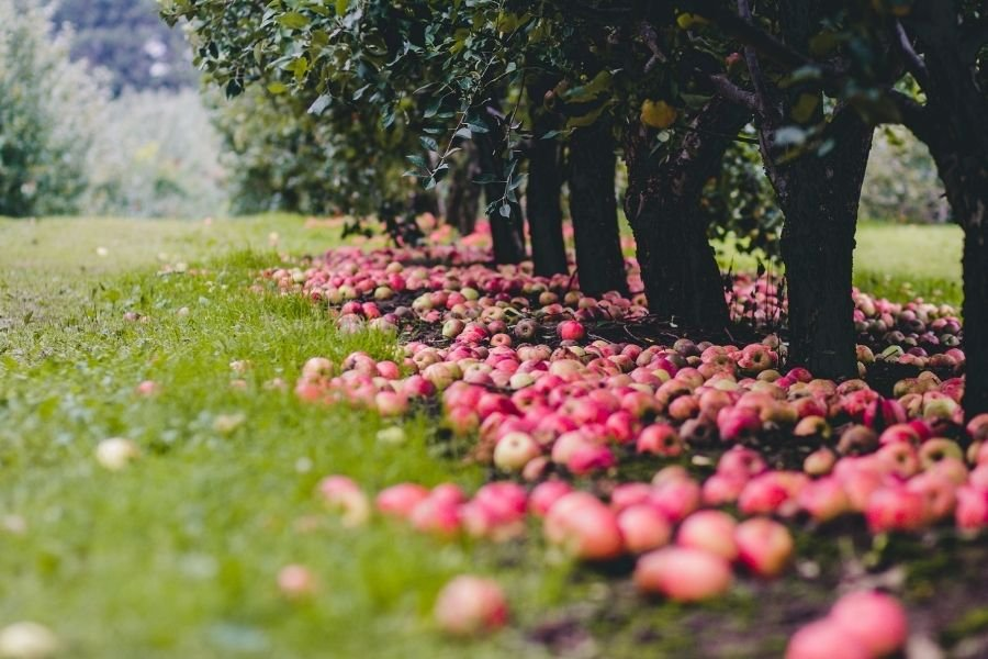 Apple-picking-long-island-new-york