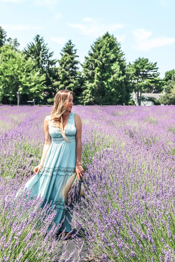 Visiting the Lavender fields is one of the best things to do in Long Island, NY