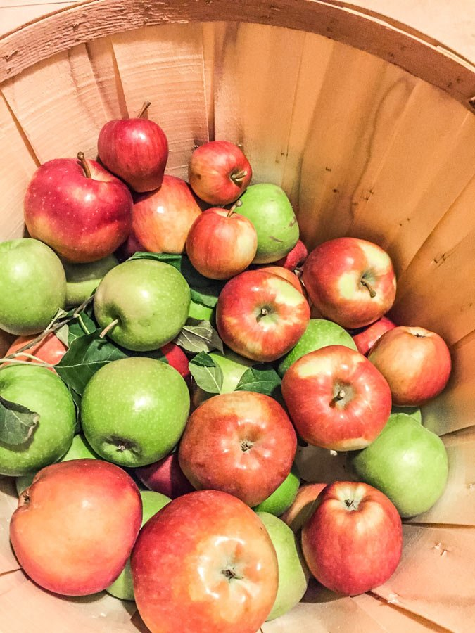 apple picking basket with apples in nc