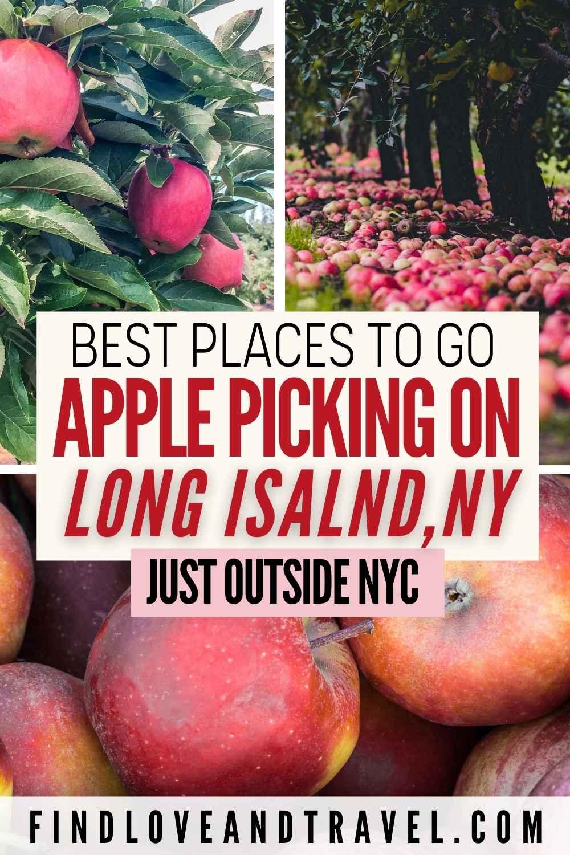 Apple picking on Long Island New York
