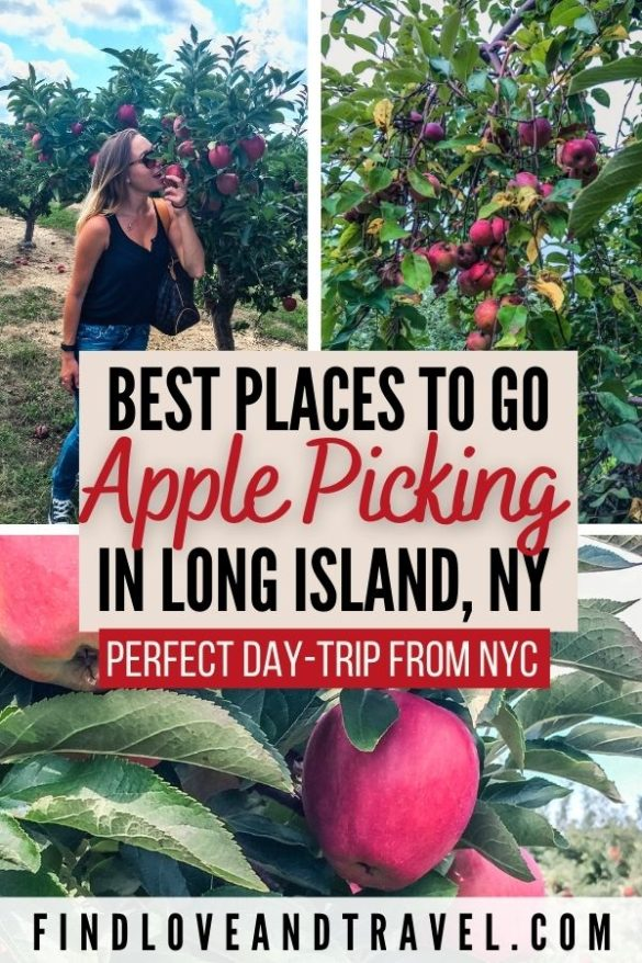 Best Places to go Apple Picking on Long Island, New York