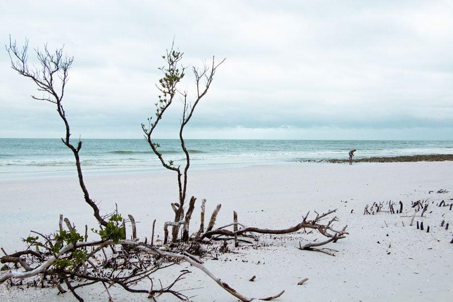 Honeymoon Island in Florida is a perfect warm winter getaways