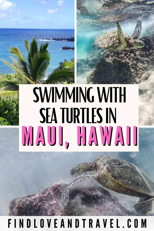 Finding Sea turtles in Maui Hawaii