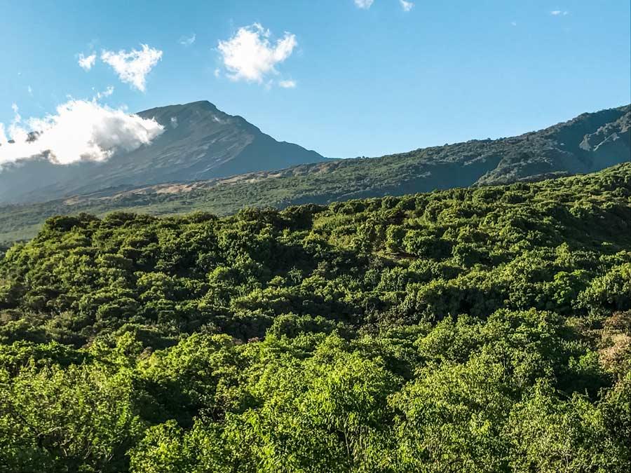 Road to Hana Jungle views in Maui, Hawaii