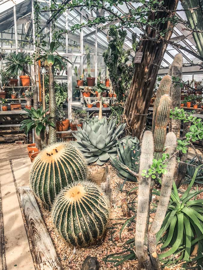 Cactus Greenhouse at the Planting Fields in Long Island