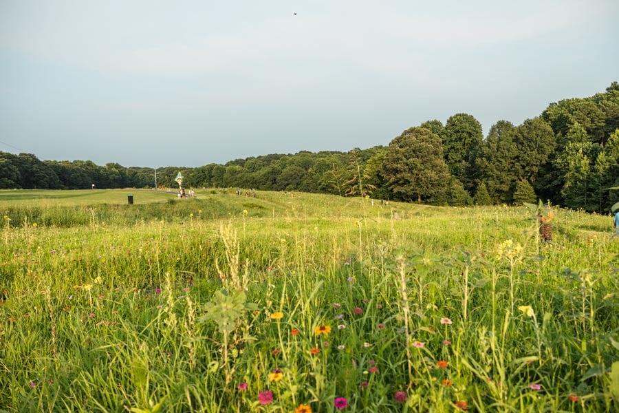 NCMA in Raleigh, NC sunflower fields