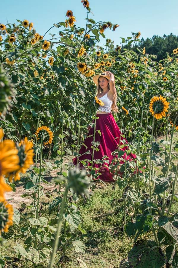 Sunflowers at Hill Ridge Farm