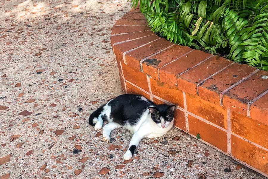 Save a Gato in Old San Juan Puerto Rico is one of the best things to do