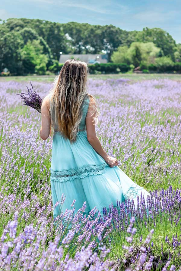 Get photo-worthy pictures on Long Island at Lavender By the Bay lavender Fields.