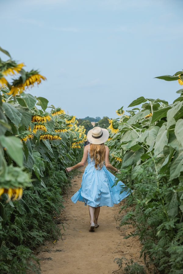 Walking through the sunflower fields at Dix Park in Raleigh, NC