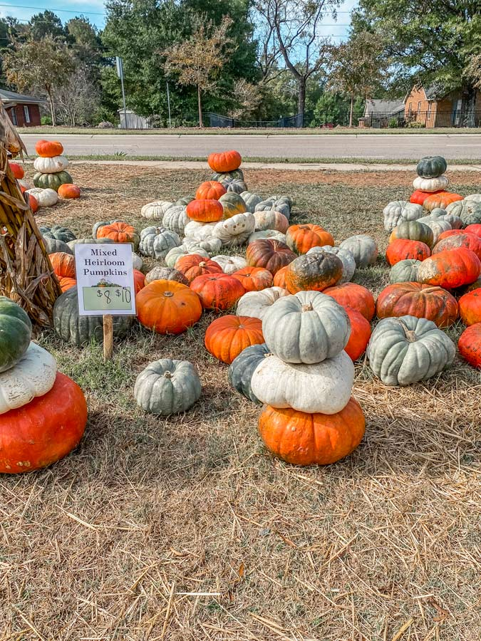 pumpkin picking in Raleigh with stacks of pumpkins in orange, green and white.