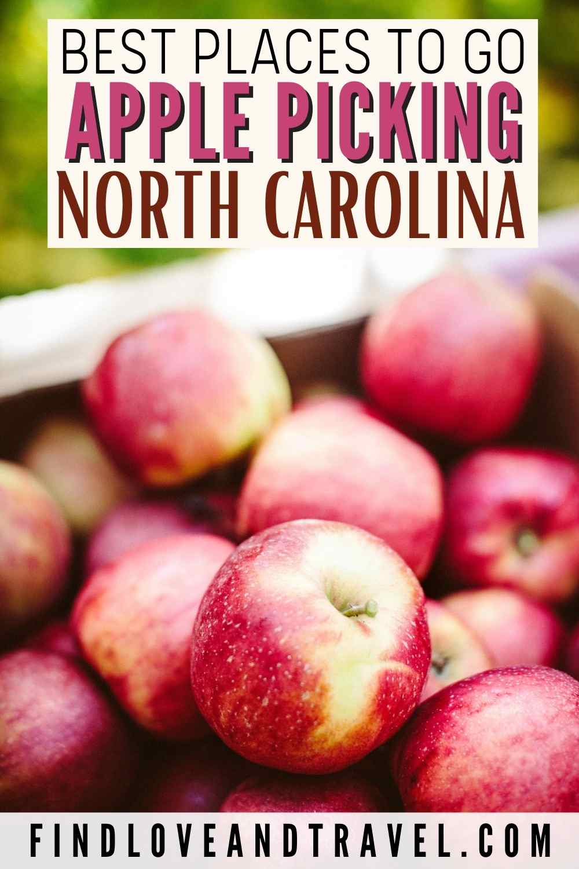 Apple picking in NC - North Carolina