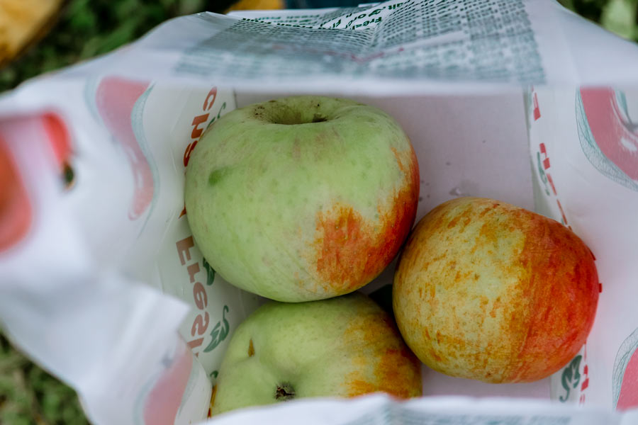 apple picking bag with 3 apples in it that are green with a little red
