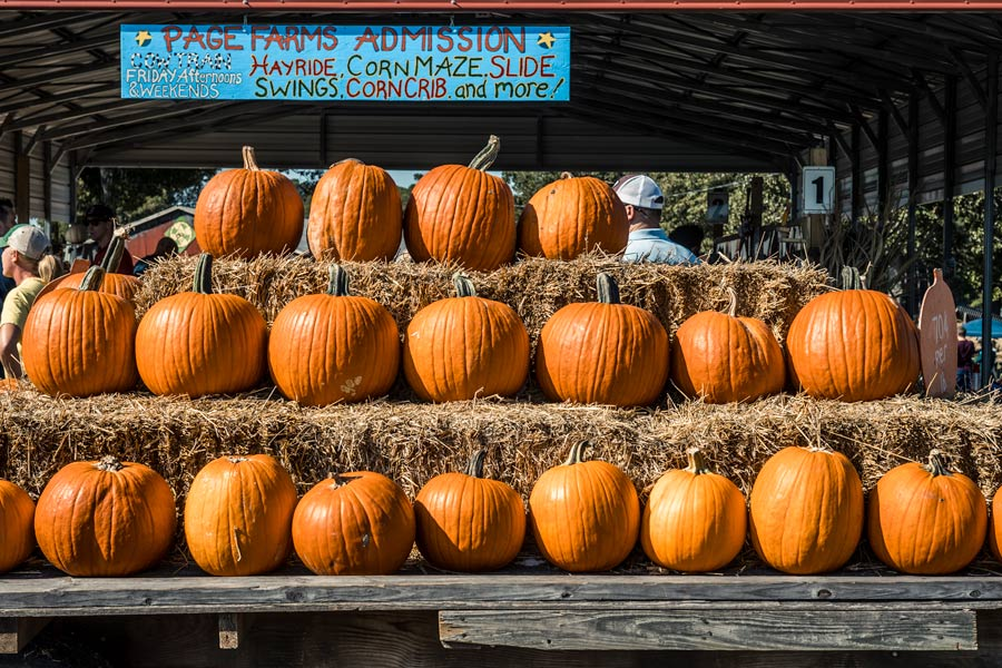 Page Farm entrance in Raleigh, NC with a stack of pumpkins